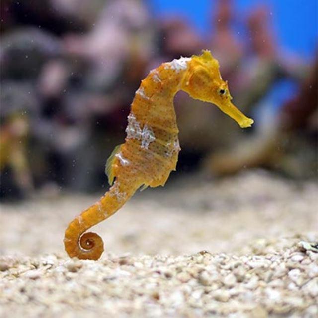 Estuaries: the Ocean's Nurseries